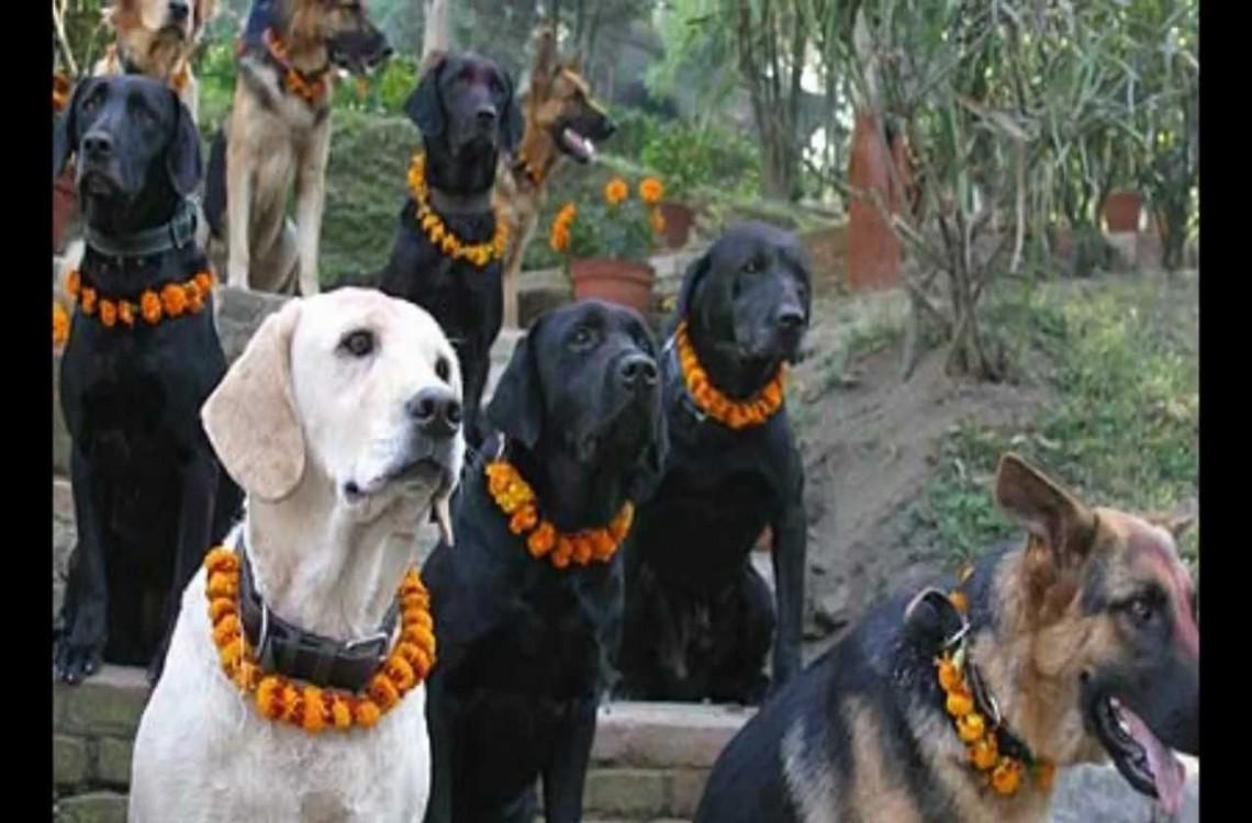 Honouring dogs for their loyalty