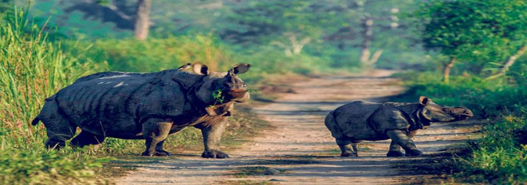 One horned Rhinoceros mother with her baby : Chitwan National Park